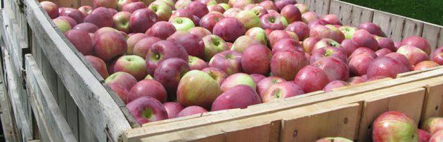 Palots de Madera con tratamientos fitosanitarios para embalaje de Frutas